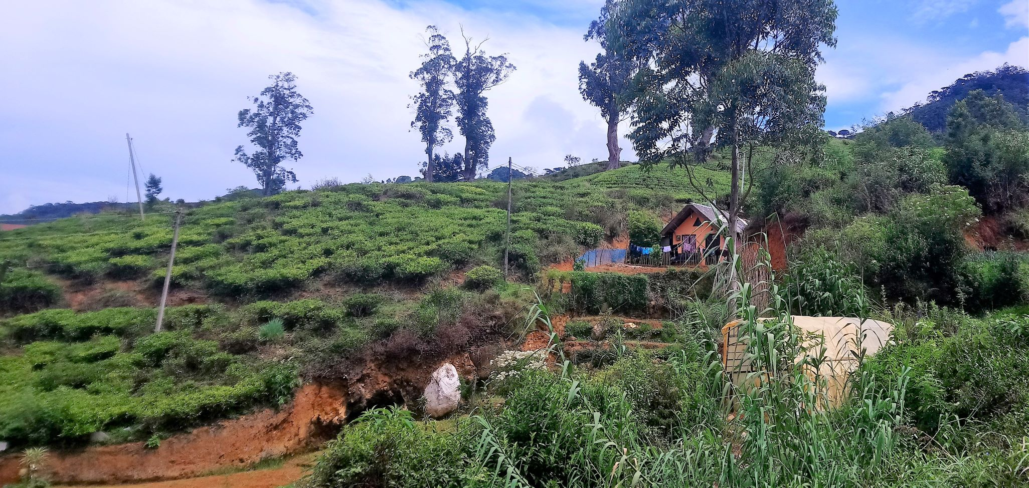 Home in tea plantation